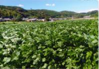 そばの数量増加。生産農家の方は、張り切っておられます。